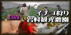 イチゴ狩り体験 九州 熊本県